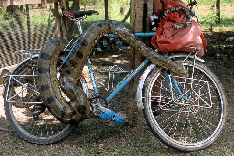 Snake on bicycle by Daisuke Nakanishi